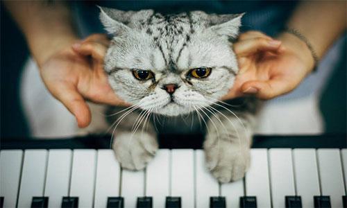 音乐留学:音乐教育专业选校推荐&申请解析
