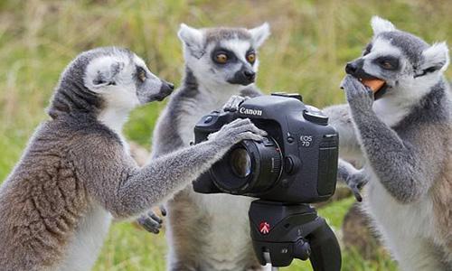 欧洲摄影专业留学费用是多少?